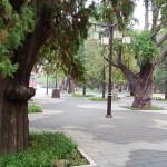 Taimiao_tree